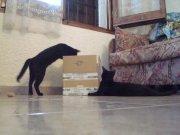 caja de carton juguete de gatos