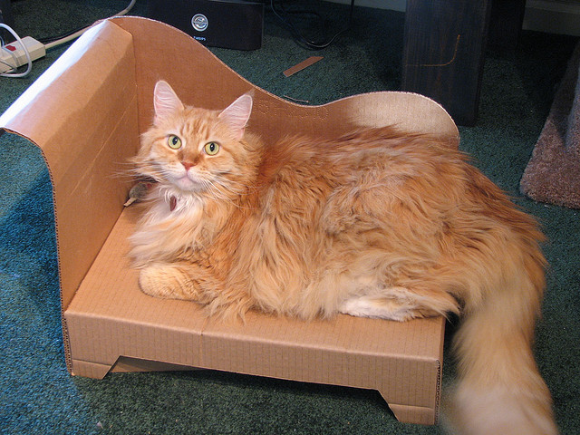 divan para gatos