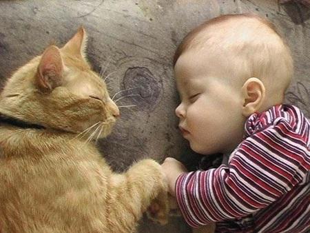 gaton con bebe