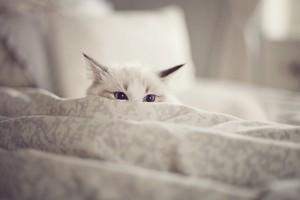 gato al acecho