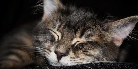 gato durmiendo