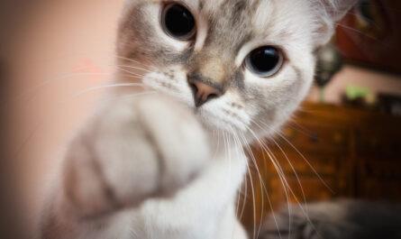 gatito jugueton