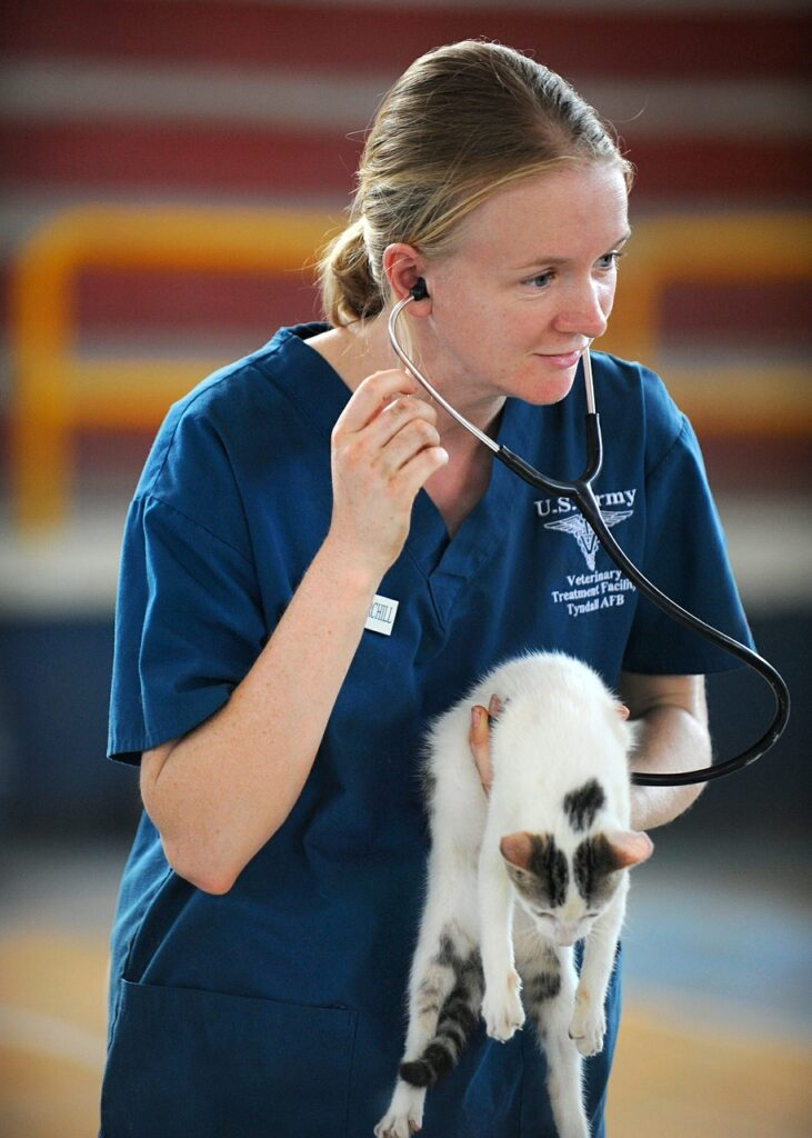 veterinaria auscultando gatito