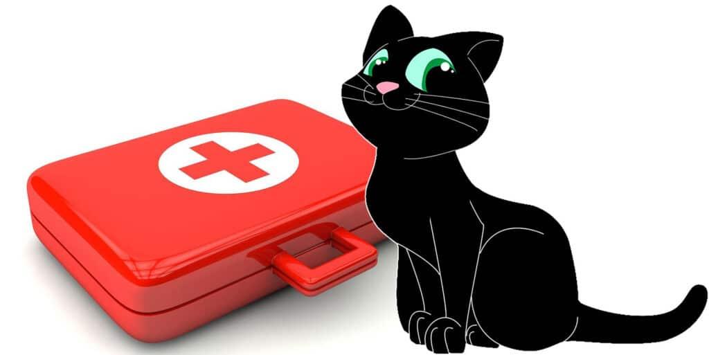 gato con maletin de urgencias