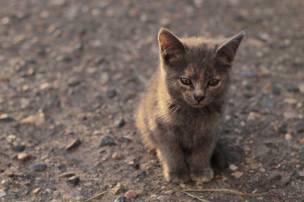 gatito callejero