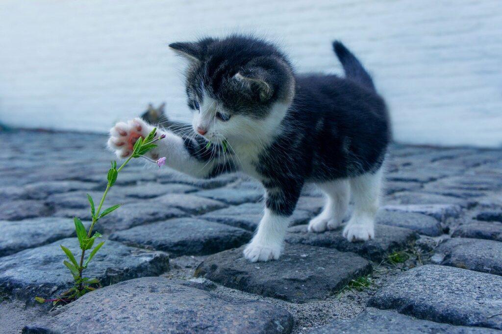 gatito jugando con una lor