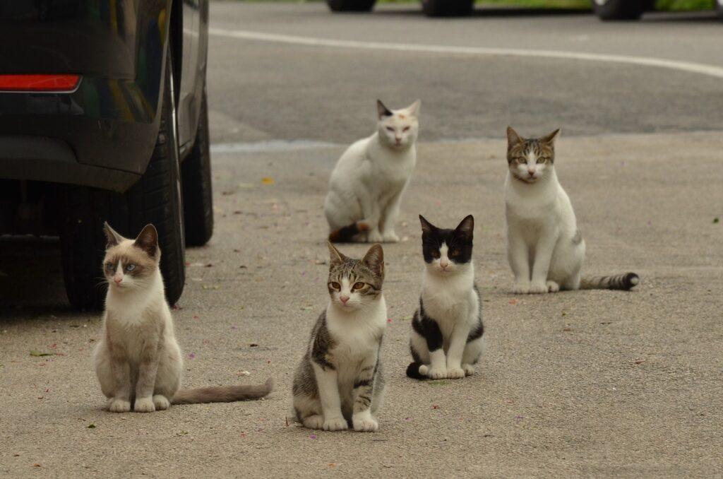 gatos vagabundos