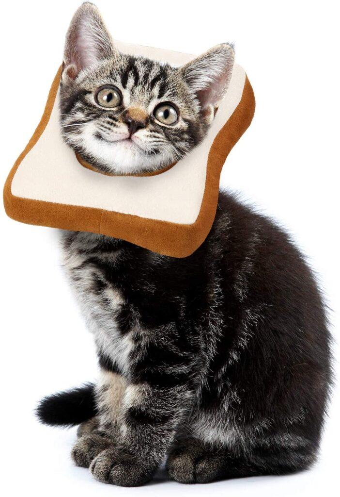 gato con collar isabelino divertido y blandito